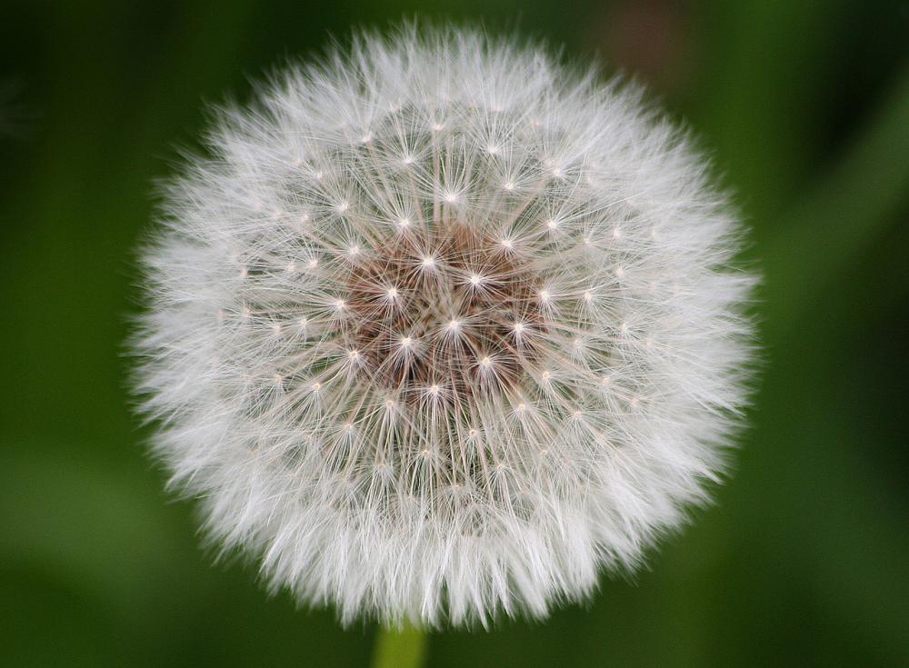 vaccino_allergia_ai_pollini